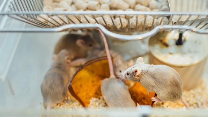 Mäusestall