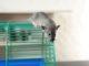 Mäusekäfig Haltung