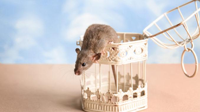 Spielzeug für Mäuse